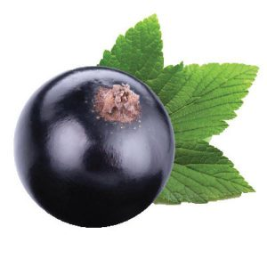 FlavourArt Blackcurrant